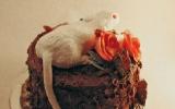 Rat Wedding Cake
